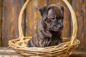 Pets and Divorce Attorneys in Monmouth and Ocean County Family Courts