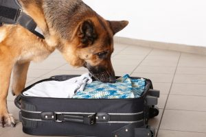 Drug Crimes and Drug Sniffing Dogs Ocean and Monmouth County Attorneys