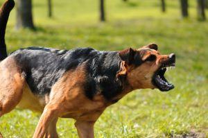 DOG BITE LAWYER BRICK NJ